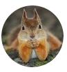 28 - Отзывы о средствах от тараканов Дохлокс