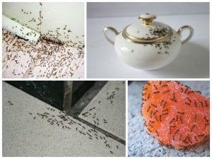 muravie 1024x768 300x225 - Средства от муравьев ДОХЛОКС