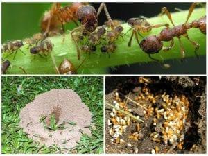 polza muravev 1 300x225 - Средства от муравьев ДОХЛОКС