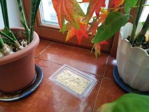 20190320 153742 300x225 - Порошок Дохлокс от тараканов и муравьев